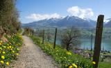 Nice walking way along lake Sarnen to village Sarnen