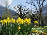 Spring flowers in Sarnen