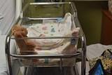 Little Hospital Crib