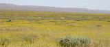 Carrizo-Panorama.jpg