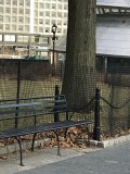 Battery Park Squirrels