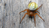 Salvage Spider