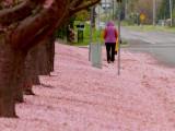 A Walk in a Spring Blizzard
