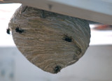 Nesting in Paradise