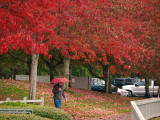 Fall Coordinates