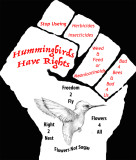 Save The Hummingbirds!