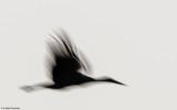 Movimento-0077923.jpg