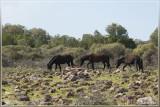 Fauna Sardinië
