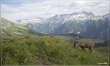 Fauna Julische Alpen (Julian Alps)