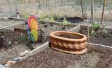 My Second Planting