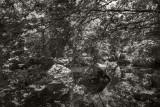 Corot2015_L1003080sepia.jpg