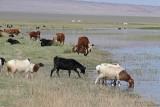 Livestock živina_MG_5682-111.jpg