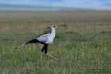 Day 3: Secretary Bird