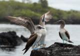Galápagos 2017