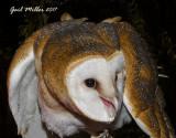 Educational Birds at Raptor Rehab of Central Arkansas