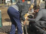 Mutt-i-grees rescue dog fair (3)