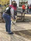Mutt-i-grees rescue dog fair (5)