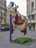 The belly-dancing cow
