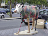 The controversial cow