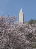 Washington Monument in spring