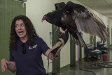 George, the turkey vulture