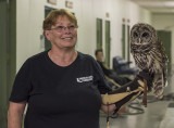 Barry, the barred owl
