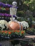 Skeleton on a pumpkin