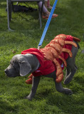 The lobster puppy