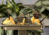 Butterflies feasting on cantaloupe