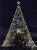 National and state Christmas trees