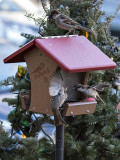 Fight at the birdhouse (1)