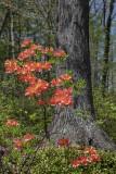 Blossoms in orange