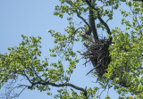 Spring is a time for eaglets at the arboretum
