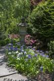 Irises and lantern