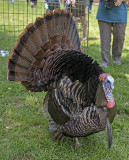 Perry, abandoned on Thanksgiving, now strutting his stuff