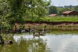 The goose pond