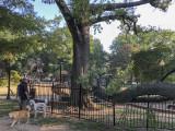 Sahraa, Riley and the fallen tree