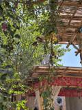 Birds at a silk paper factory, Samarkand