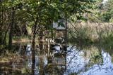 Aquatic gardens under water