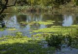 Kenilworth Aquatic Gardens, submerged
