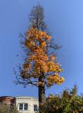 The never-ending task of autumn