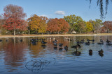 Fall on the Mall