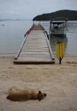 Reaching the beach (Praia dos Golfinhos) from where we took the boat to Anhatomirin island.