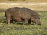 Day 13 Chobe National Park 7/8/2017