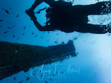 Wreck Diving, Peltastis