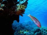 Underwater - Diving