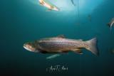 Diving @ Grüblsee 2018 (Nikon D750)