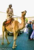 A lone Bedu rides into Al Ain