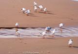 Gulls browsing