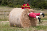 Local farmers competed this year to decorate their hay bales!